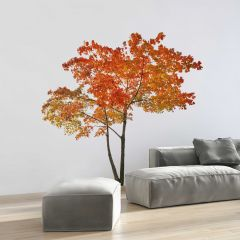 Riesen-Wandaufkleber Orange Tree